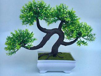 Đây là những lý do bạn nên chọn cây bonsai mini để bàn làm việc